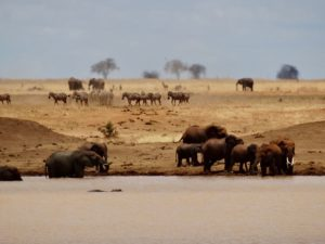 Elephants, zebras and a hippo at a water hole in Kenya